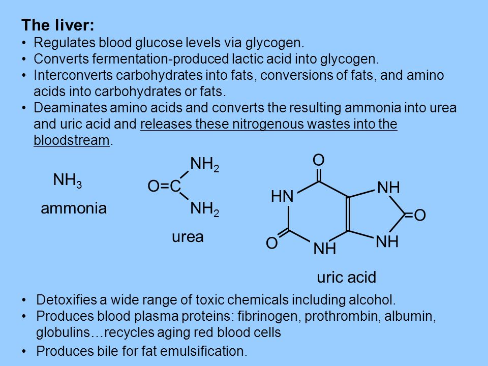 The liver: O NH2 NH3 O=C HN ammonia =O urea NH uric acid