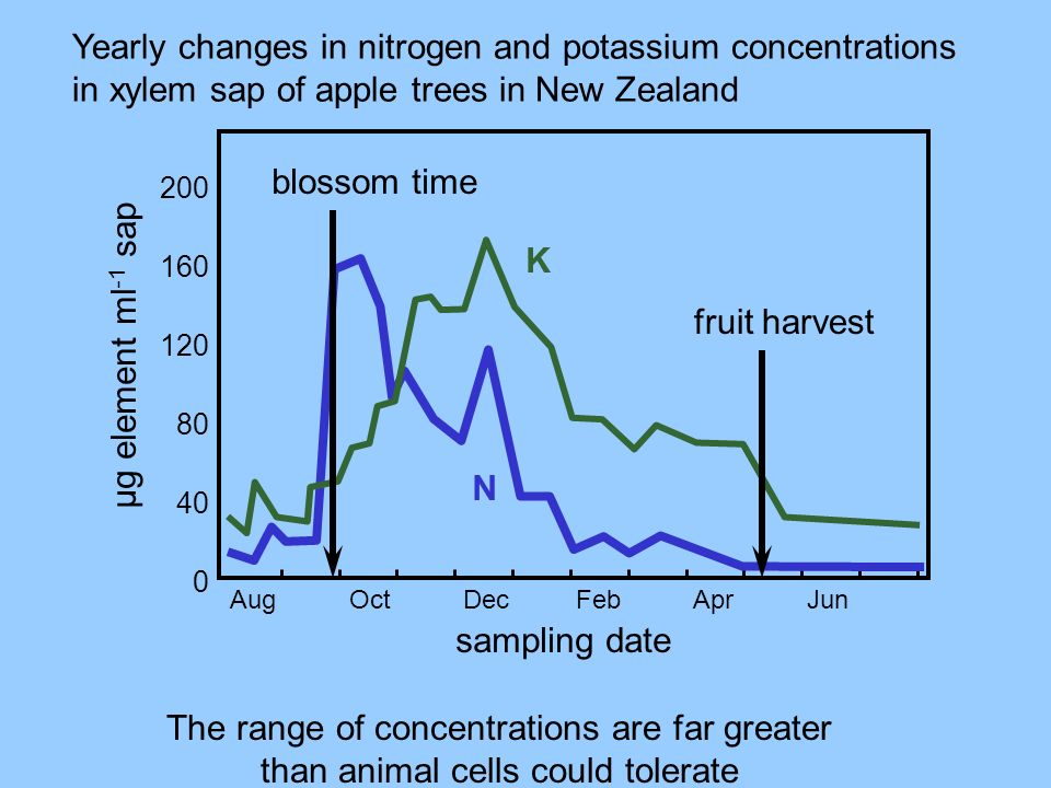 Yearly changes in nitrogen and potassium concentrations in xylem sap of apple trees in New Zealand