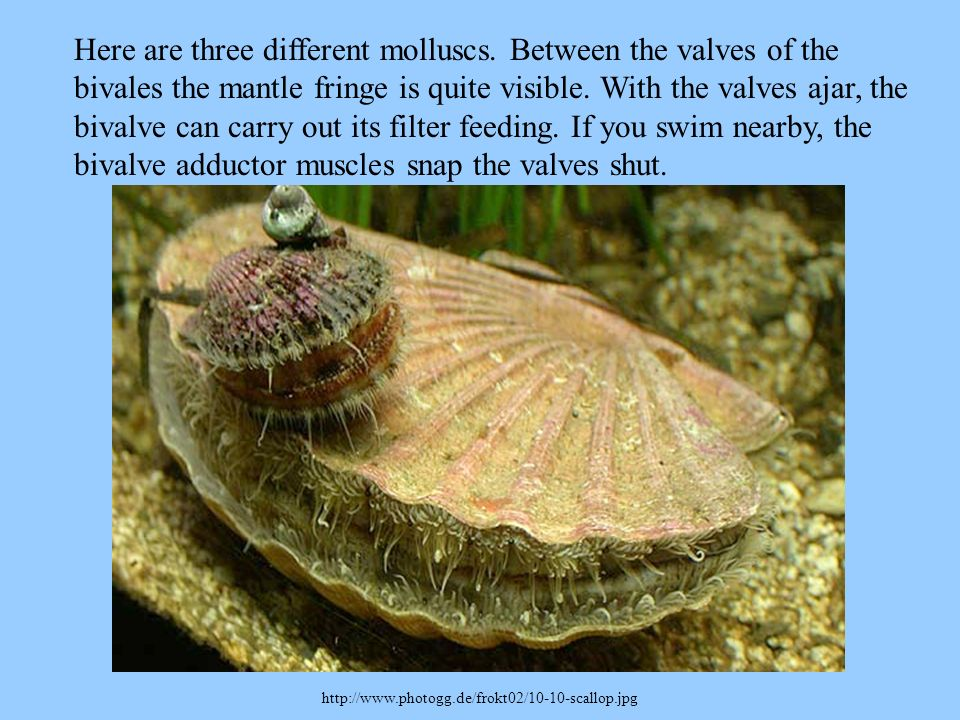 Here are three different molluscs