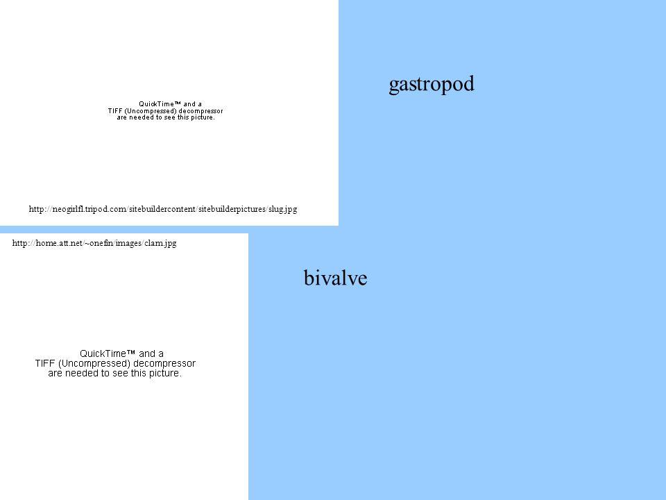 gastropod http://neogirlfl.tripod.com/sitebuildercontent/sitebuilderpictures/slug.jpg. http://home.att.net/~onefin/images/clam.jpg.