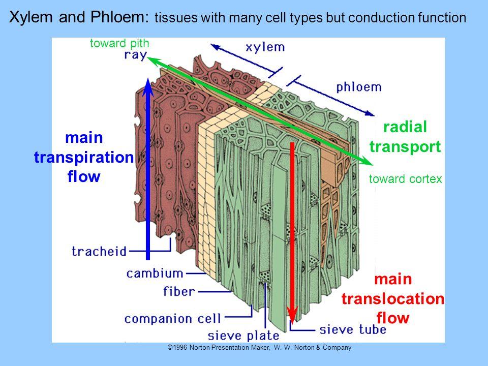 main transpiration flow main translocation flow