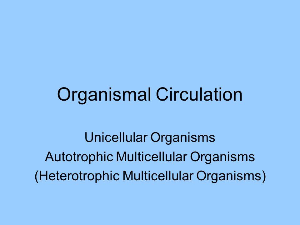 Organismal Circulation