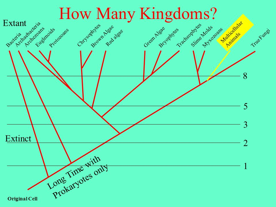 How Many Kingdoms Extant 8 5 3 Extinct 2 Long Time with 1