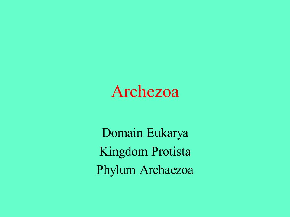 Domain Eukarya Kingdom Protista Phylum Archaezoa