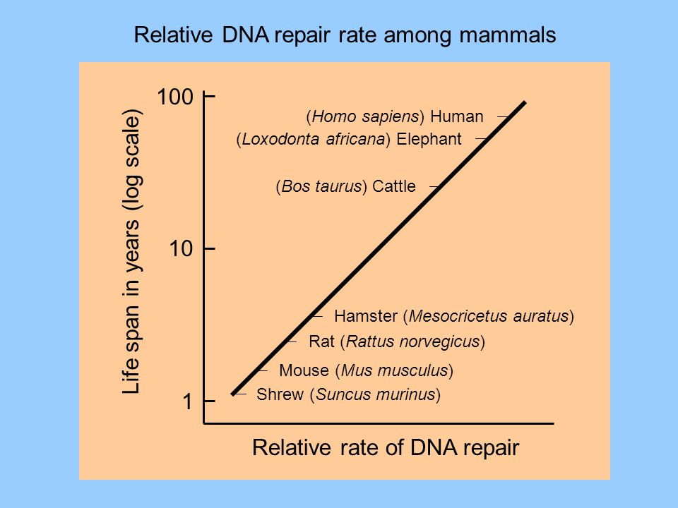 Relative DNA repair rate among mammals