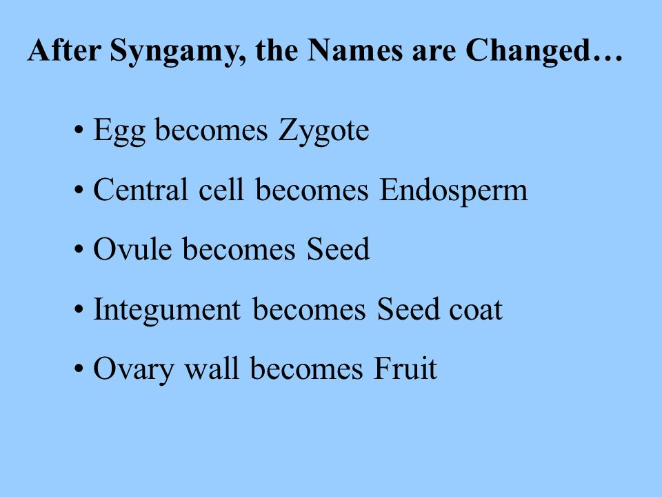 After Syngamy, the Names are Changed…