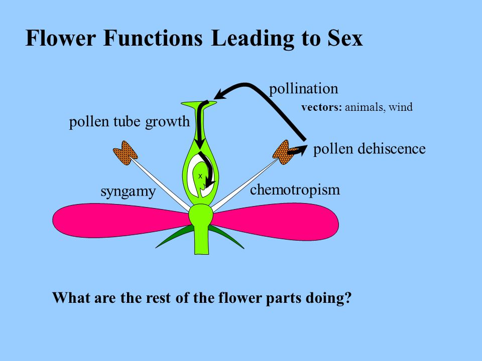 Flower Functions Leading to Sex