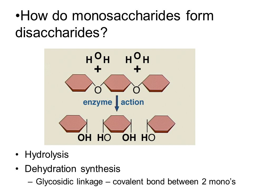 dehydration synthesis definition Reactions of dehydration synthesis and hydrolysis as mentioned earlier, dehydration - dehydration synthesis: definition, reaction & examples - video & lesson transcript | studycom.