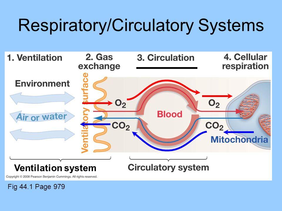 Respiratory/Circulatory Systems