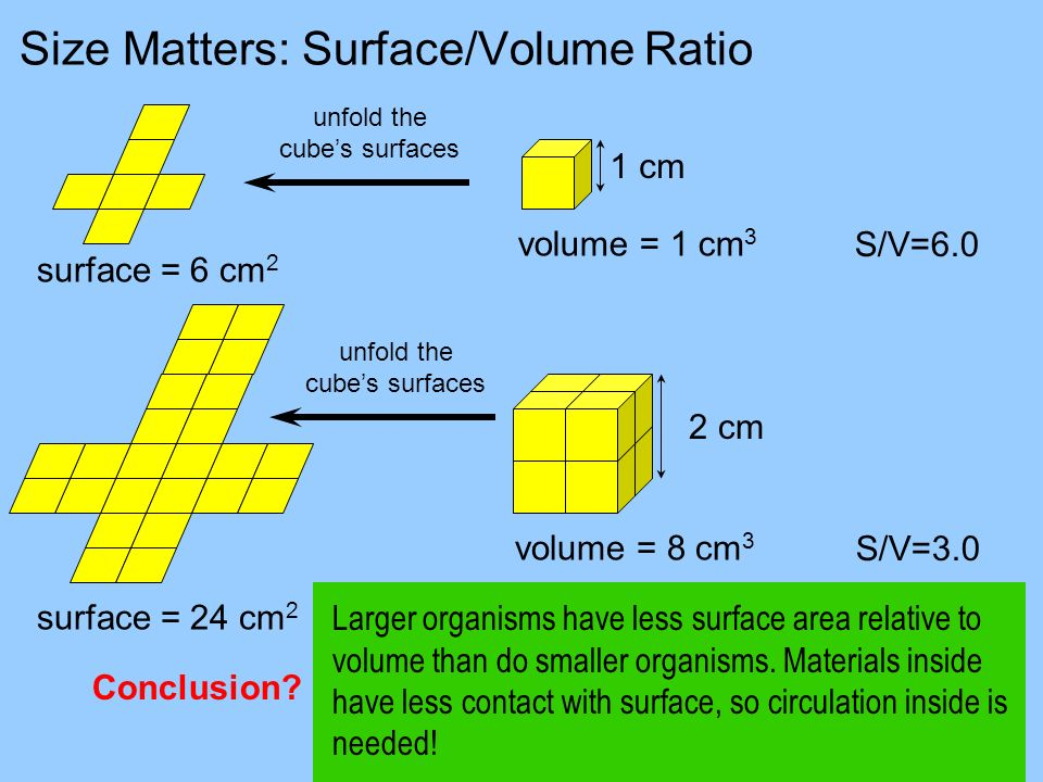 Size Matters: Surface/Volume Ratio