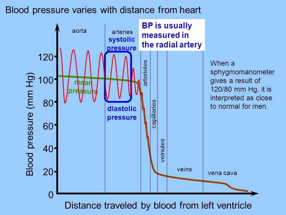 Blood pressure varies with distance from heart