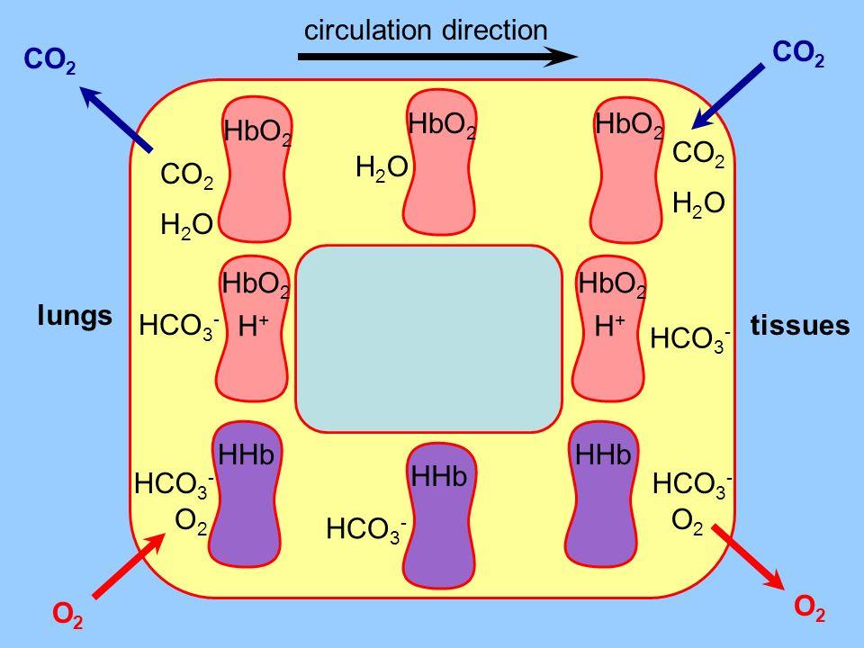 circulation direction