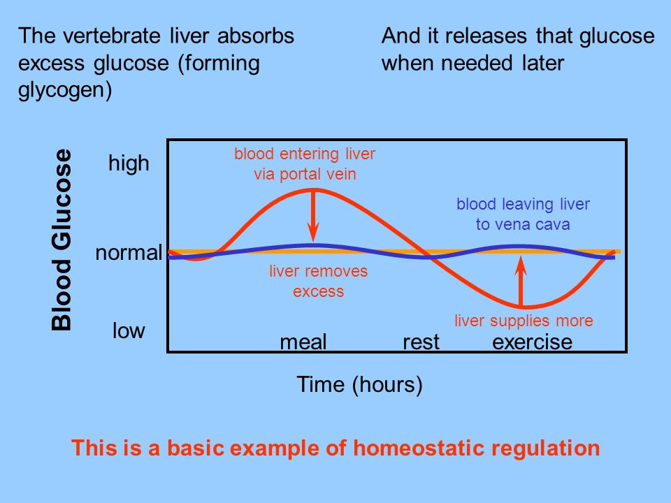 This is a basic example of homeostatic regulation