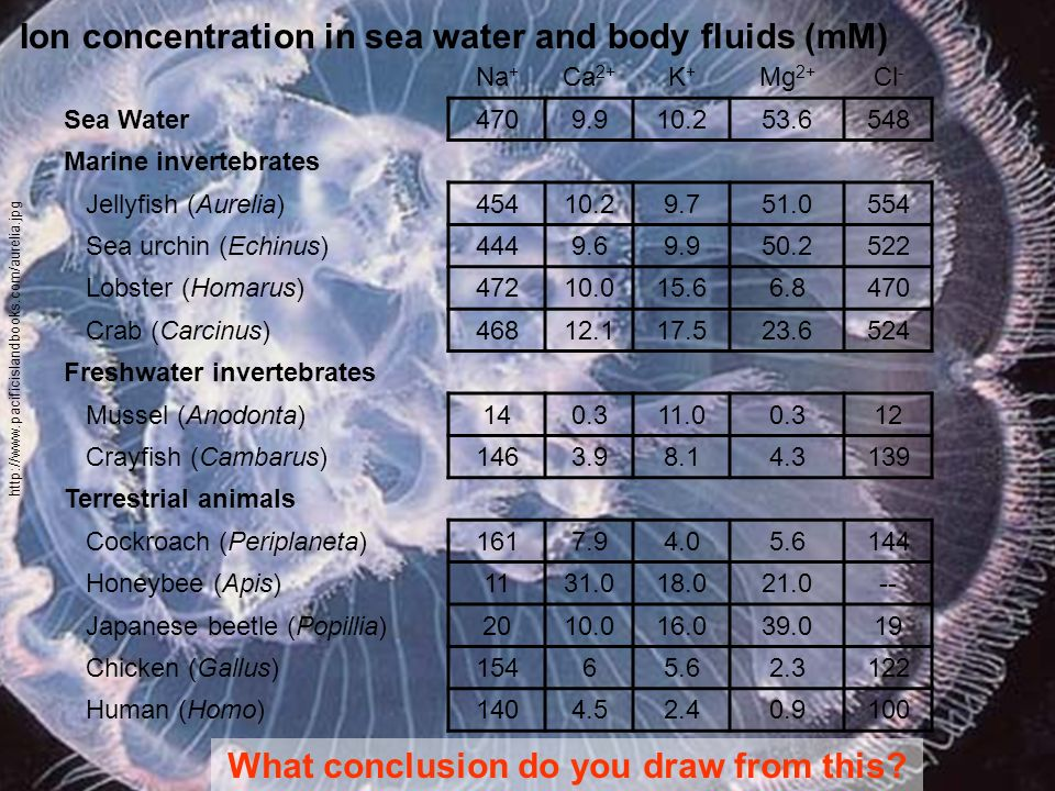 Ion concentration in sea water and body fluids (mM)