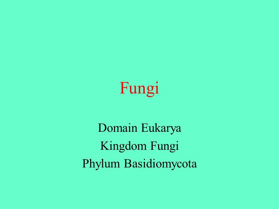 Domain Eukarya Kingdom Fungi Phylum Basidiomycota