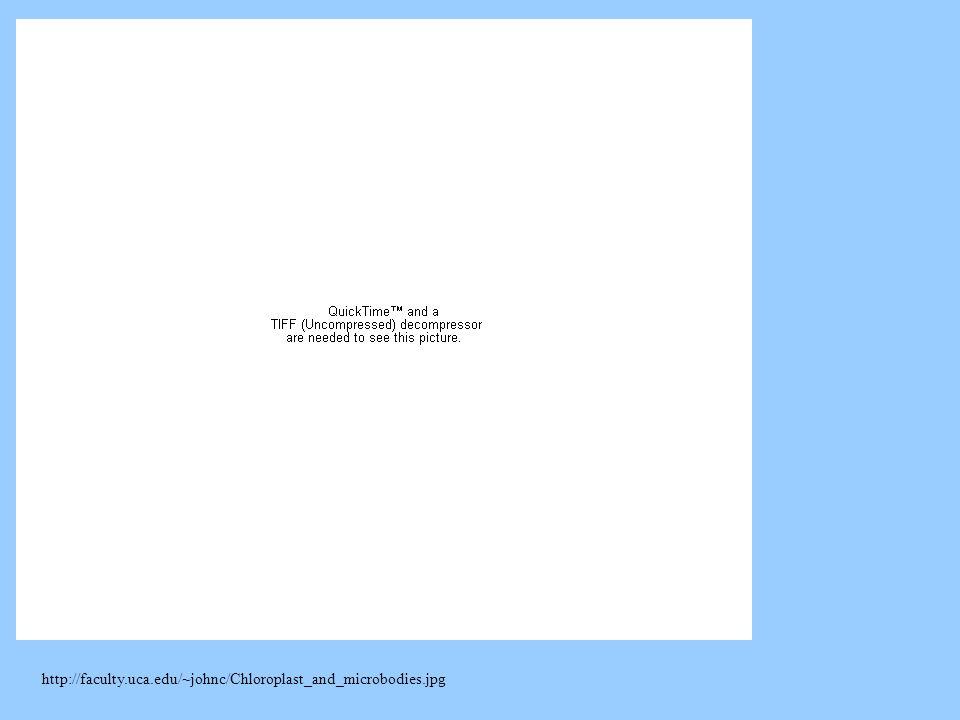 http://faculty.uca.edu/~johnc/Chloroplast_and_microbodies.jpg