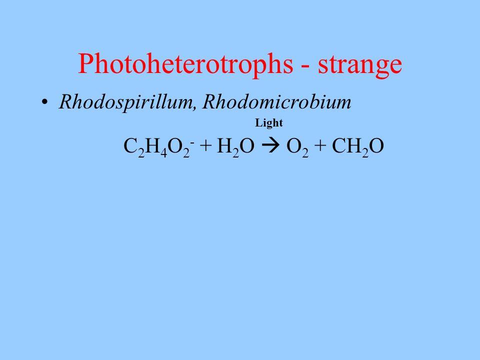Photoheterotrophs - strange