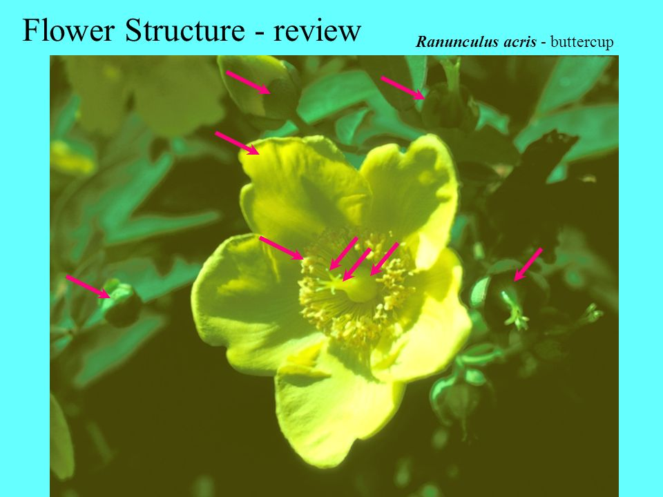 Flower Structure - review
