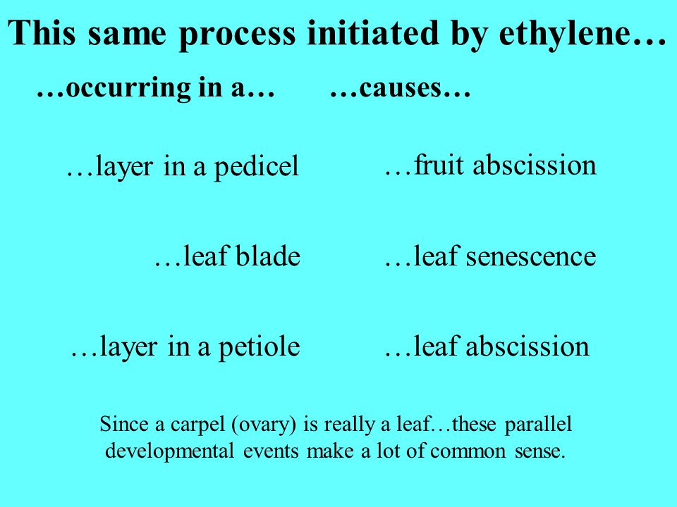 This same process initiated by ethylene…