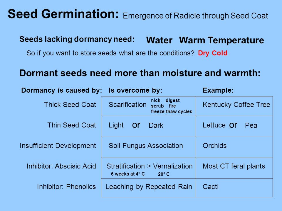 Seed Germination: Water Warm Temperature