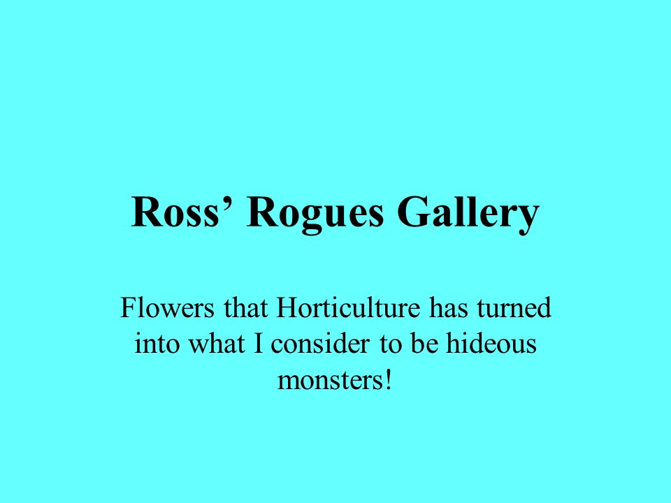 Ross' Rogues Gallery Flowers that Horticulture has turned into what I consider to be hideous monsters!