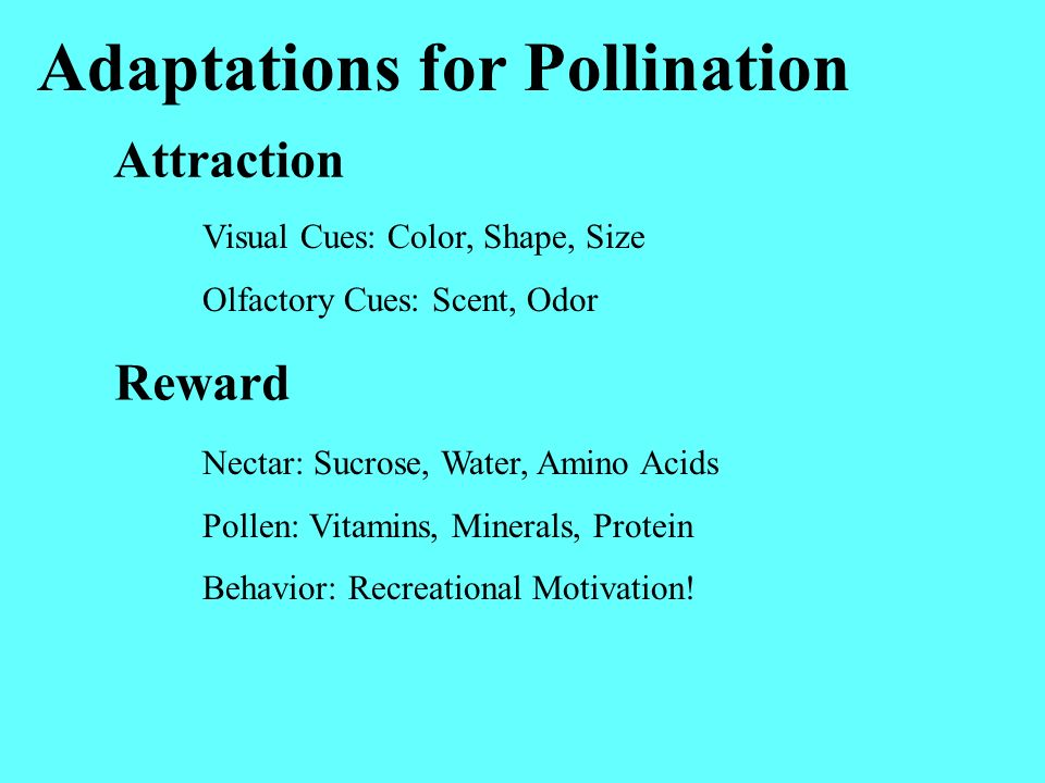 Adaptations for Pollination