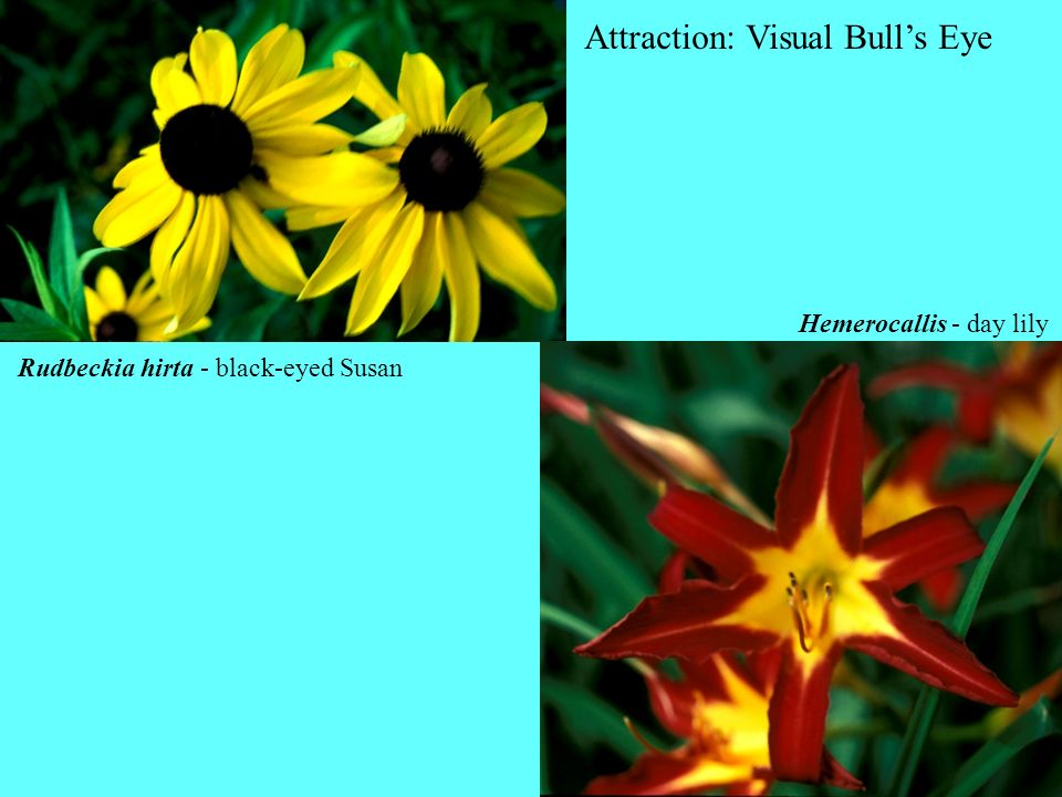 Attraction: Visual Bull's Eye