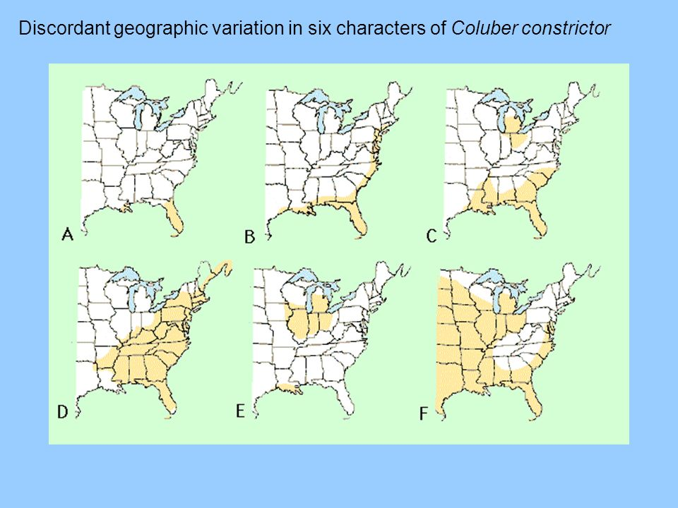 Discordant geographic variation in six characters of Coluber constrictor