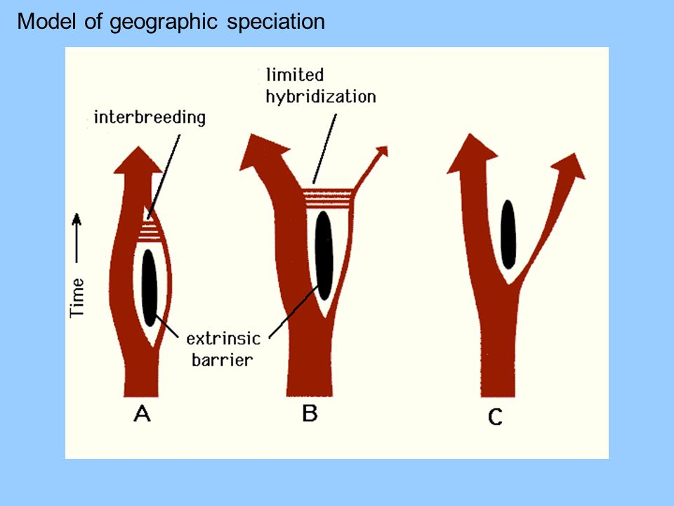 Model of geographic speciation