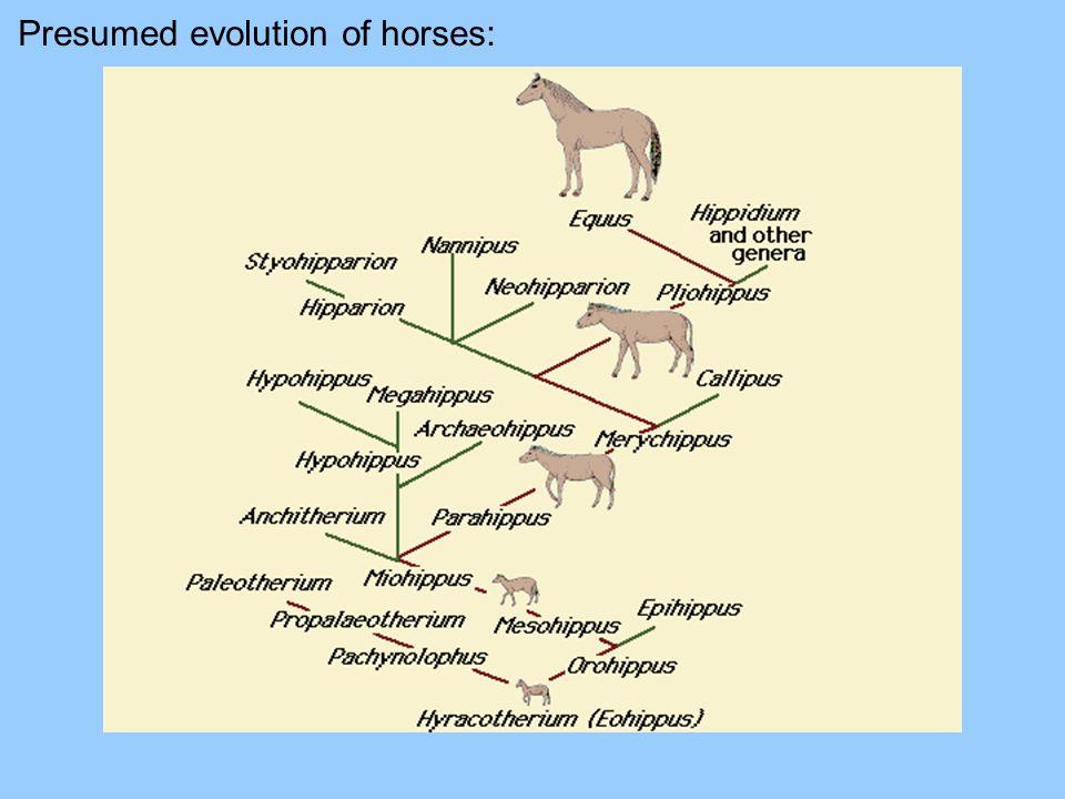 Presumed evolution of horses:
