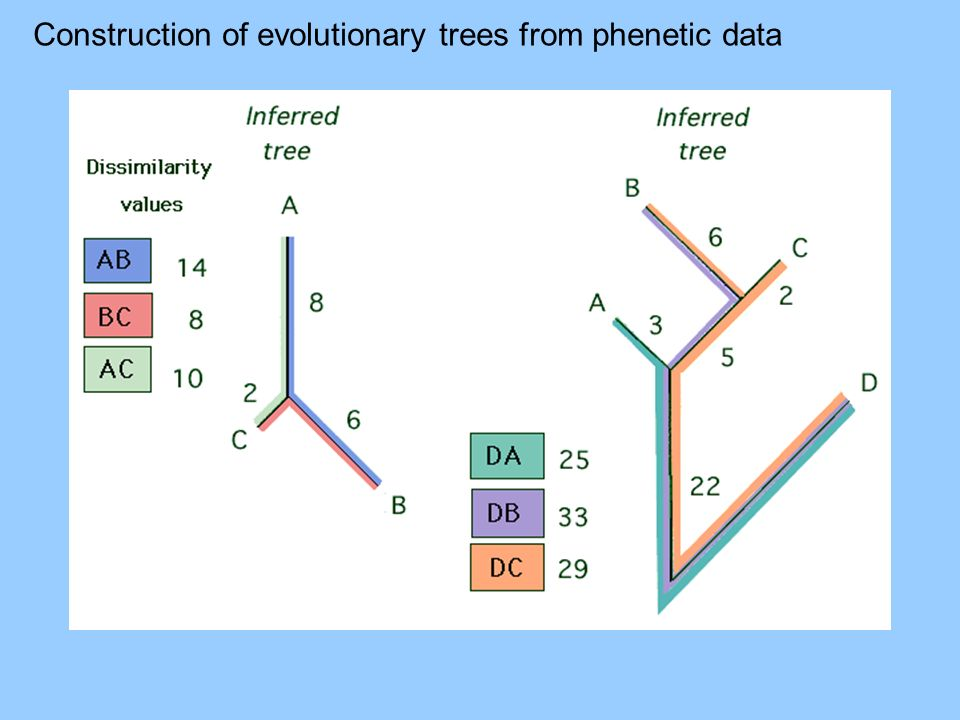 Construction of evolutionary trees from phenetic data