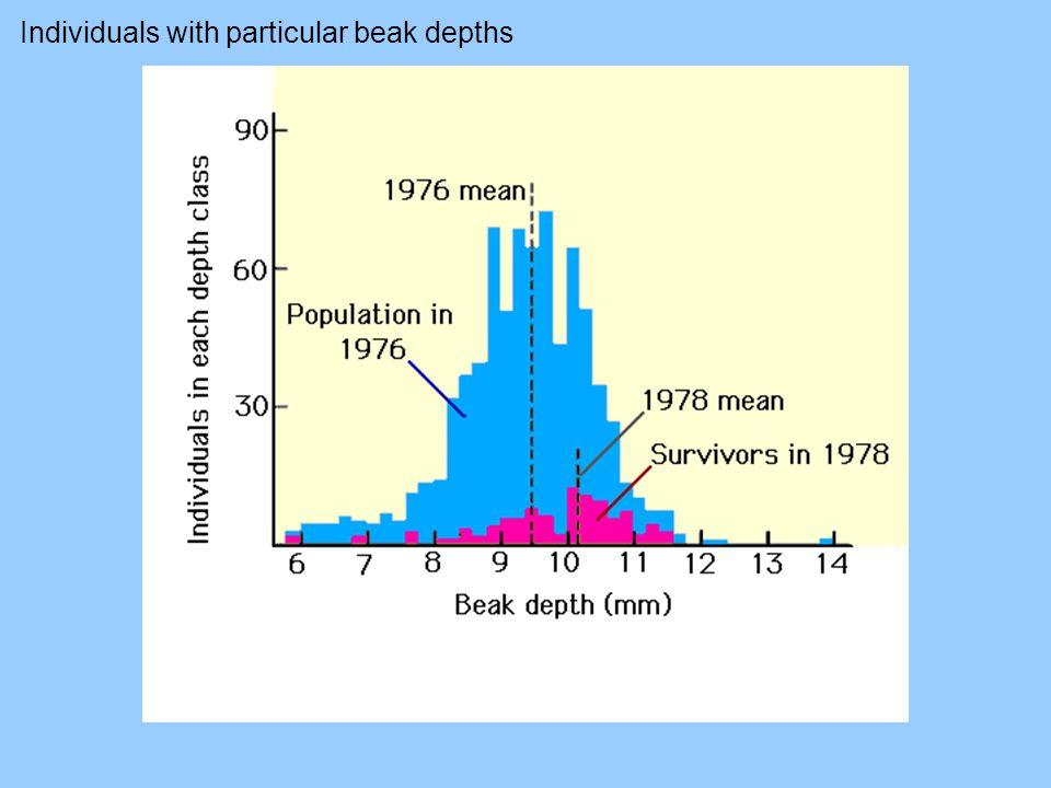 Individuals with particular beak depths