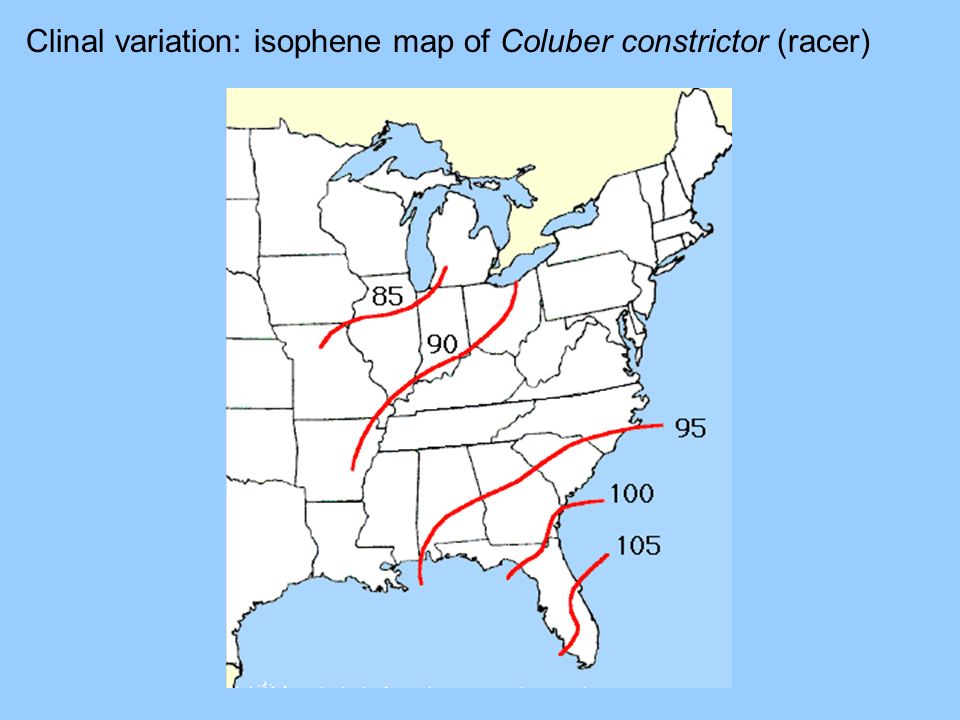 Clinal variation: isophene map of Coluber constrictor (racer)