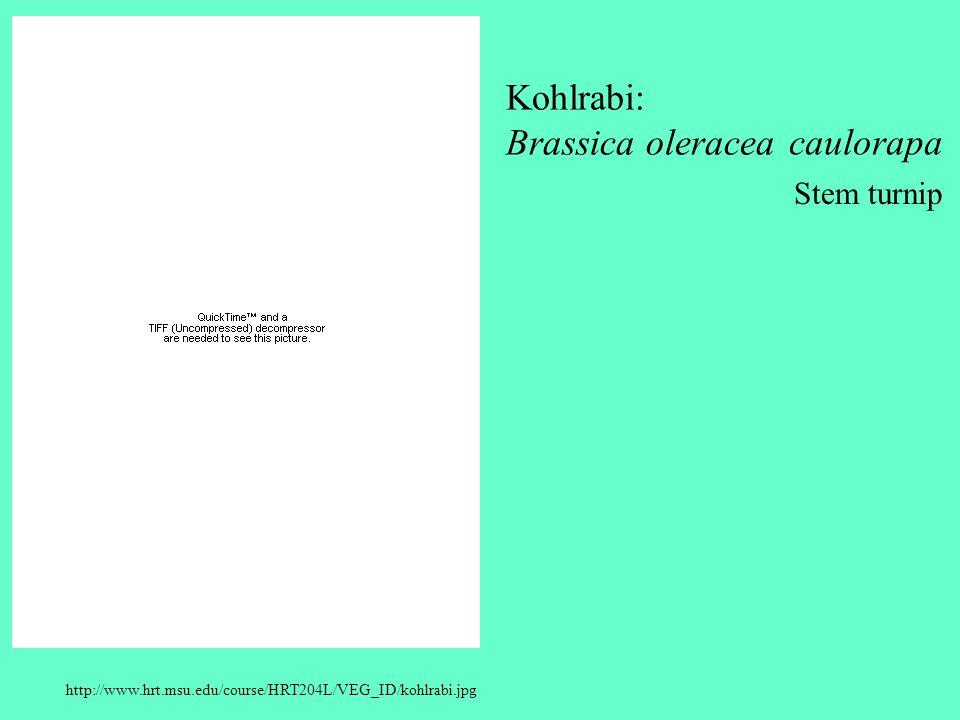 Kohlrabi: Brassica oleracea caulorapa Stem turnip