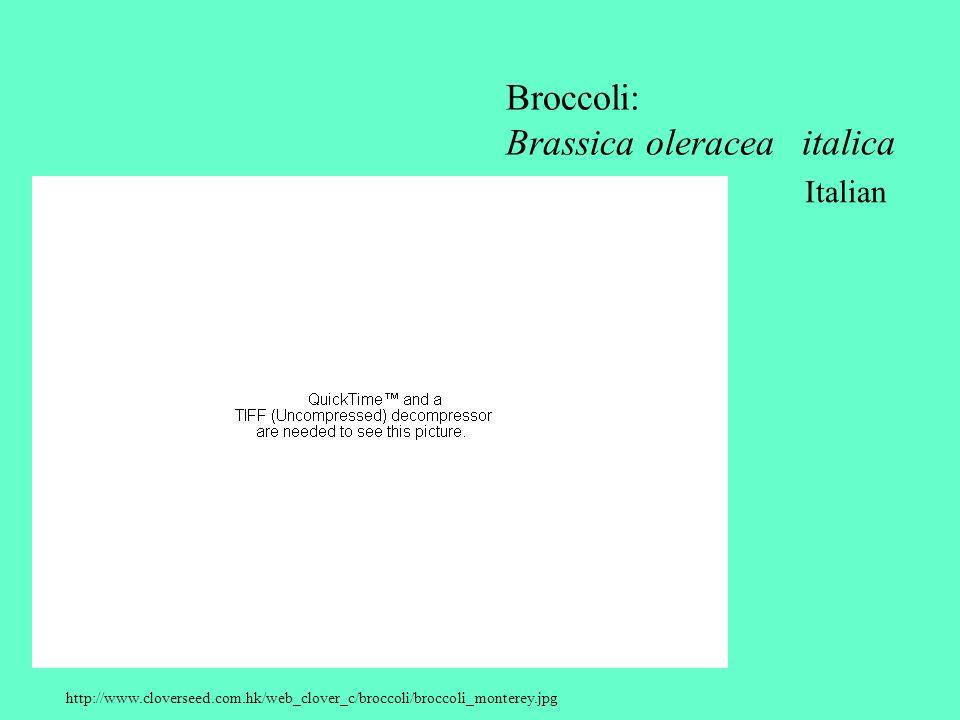 Broccoli: Brassica oleracea italica Italian