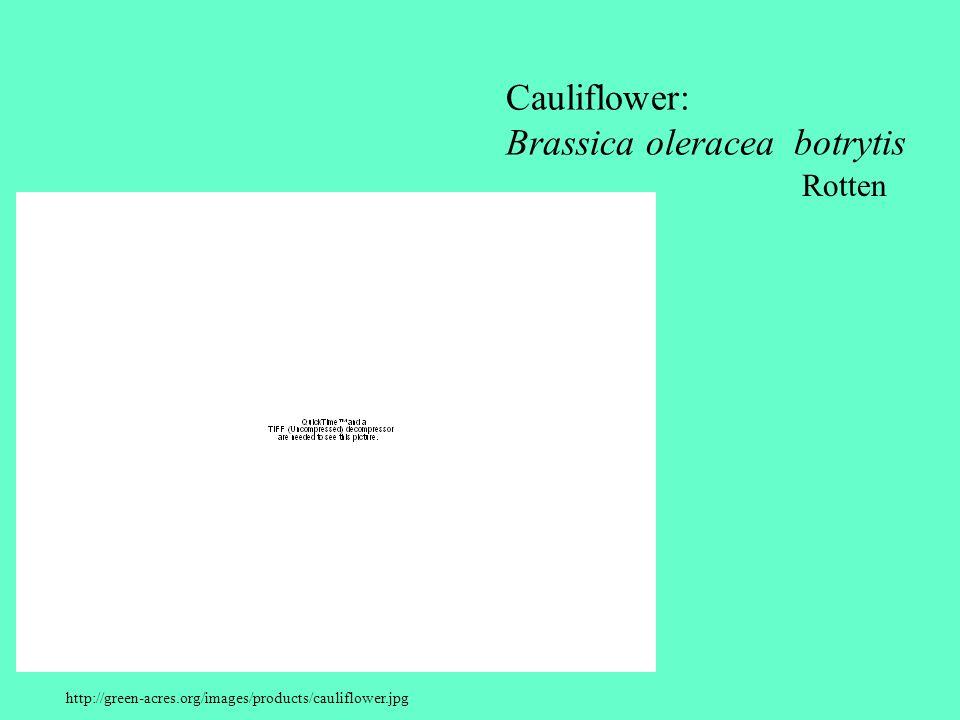 Cauliflower: Brassica oleracea botrytis Rotten
