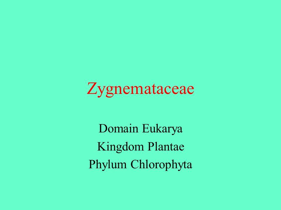 Domain Eukarya Kingdom Plantae Phylum Chlorophyta