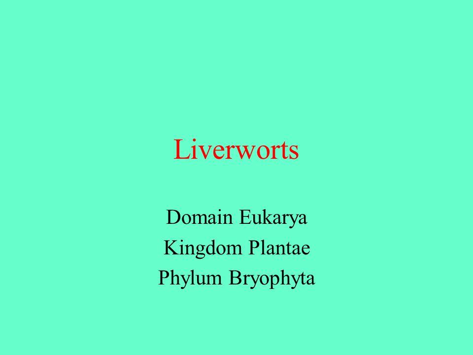 Domain Eukarya Kingdom Plantae Phylum Bryophyta