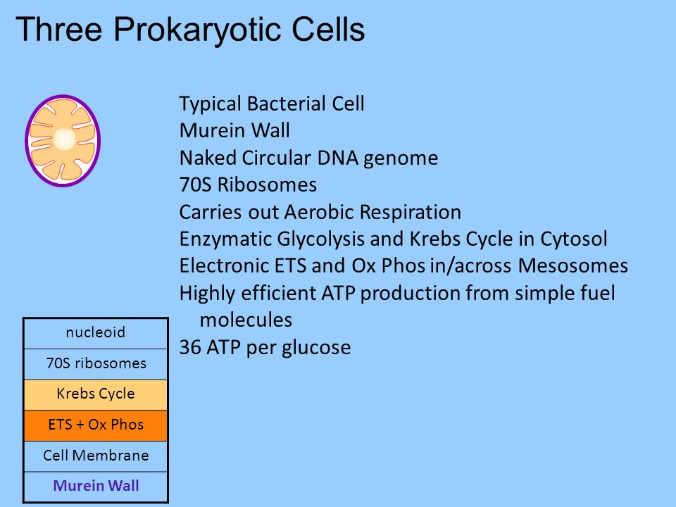 Three Prokaryotic Cells