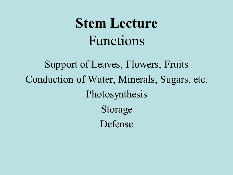 Stem Lecture Functions Support of Leaves, Flowers, Fruits