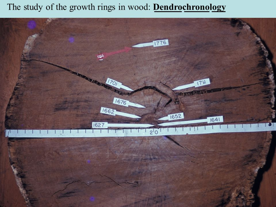 The study of the growth rings in wood: Dendrochronology