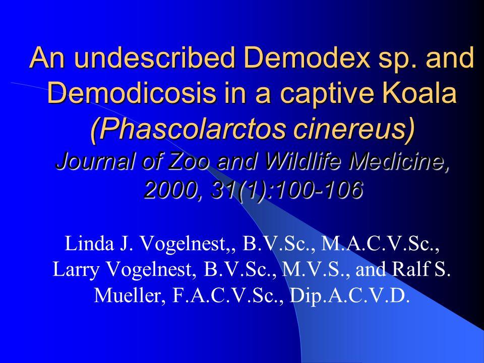 An undescribed Demodex sp