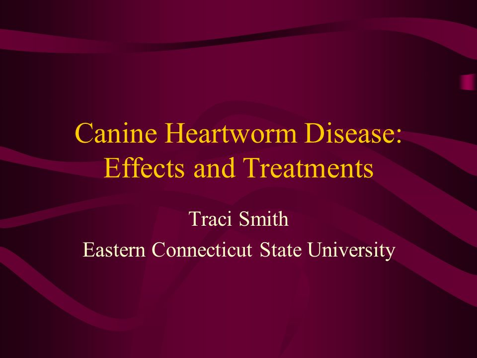 Canine Heartworm Disease: Effects and Treatments