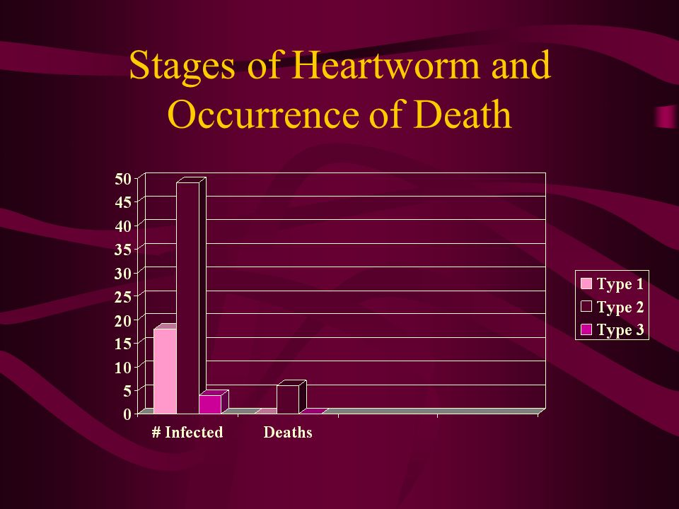 Stages of Heartworm and Occurrence of Death