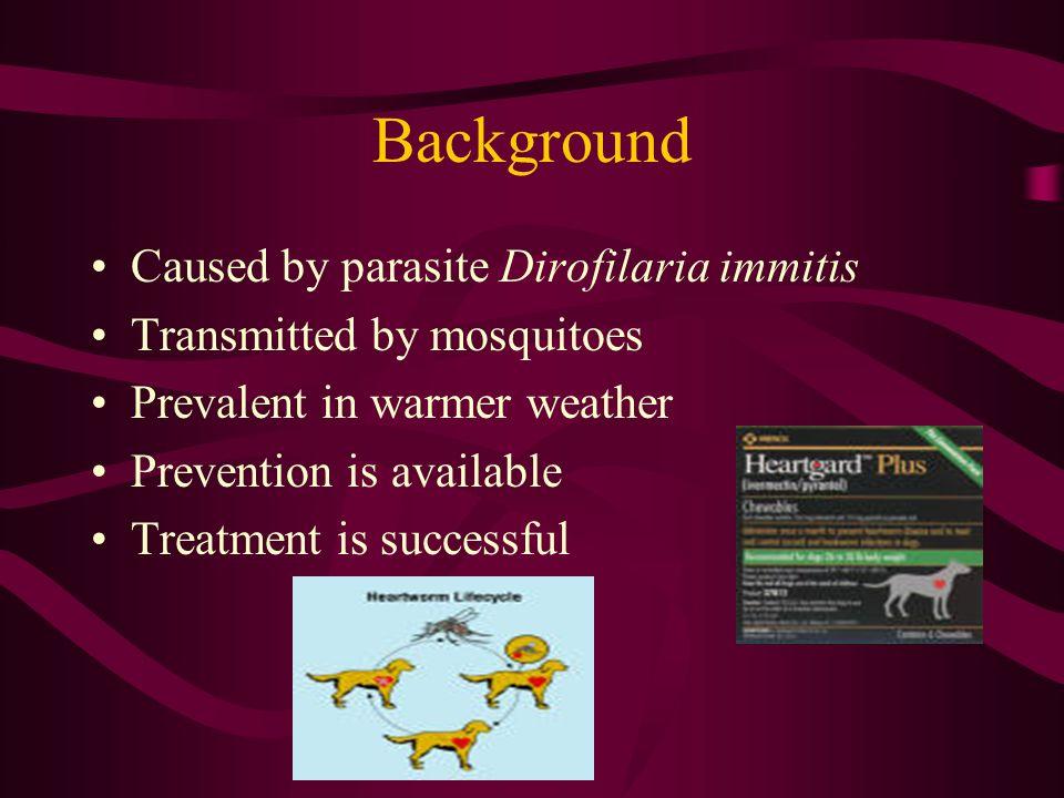 Background Caused by parasite Dirofilaria immitis