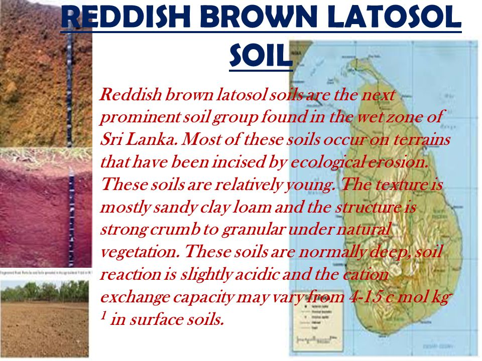 Soils of sri lanka ppt video online download for What is found in soil