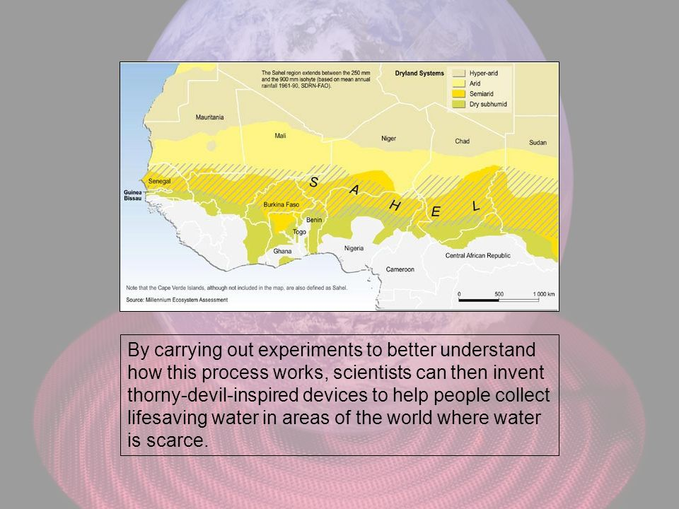 By carrying out experiments to better understand how this process works, scientists can then invent thorny-devil-inspired devices to help people collect lifesaving water in areas of the world where water is scarce.