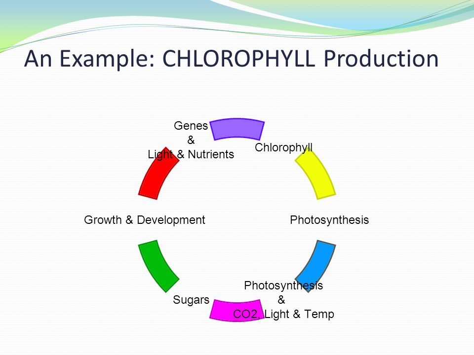 plant growth and development essay example Plant hormones help coordinate growth, development, and responses to environmental stimuli in general, plant hormones control plant growth and development by affecting the division, elongation, and differentiation of cells.