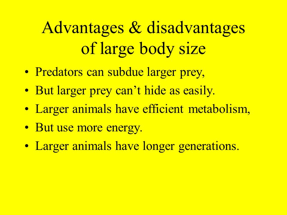 Advantages & disadvantages of large body size