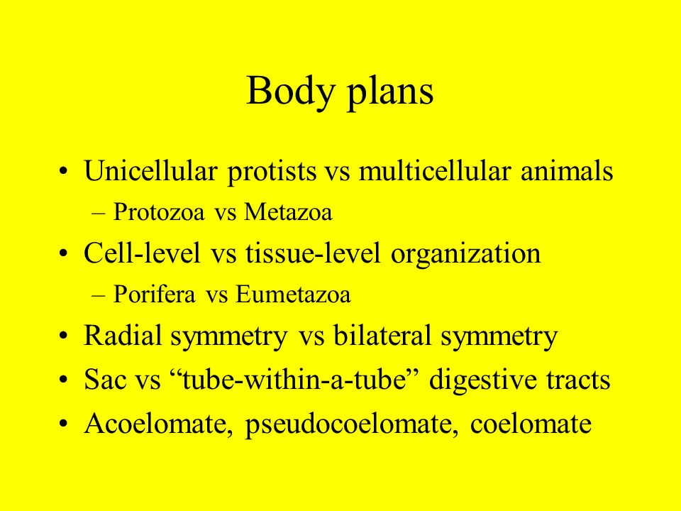 Body plans Unicellular protists vs multicellular animals